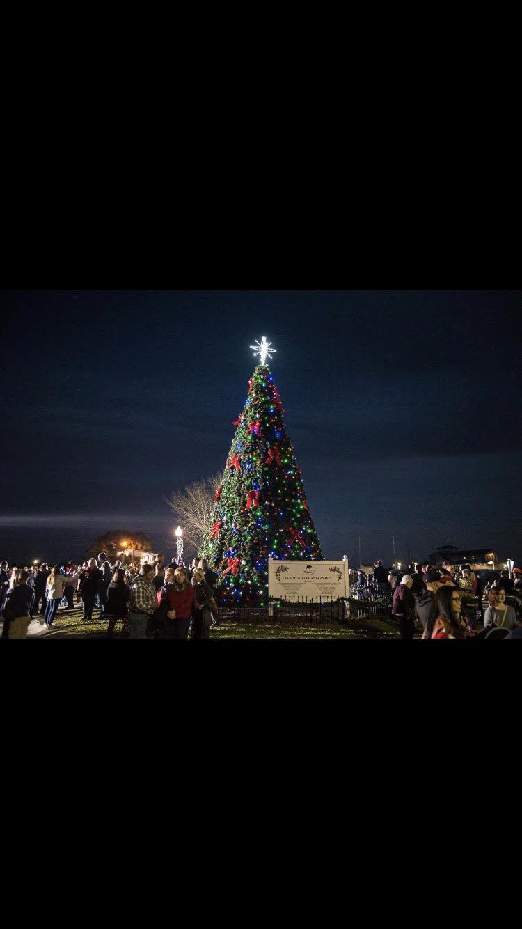 beary merry christmas christmas tree lighting visit new bern