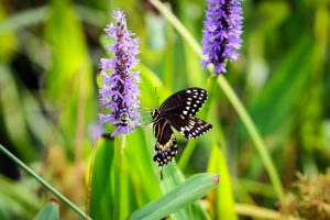 Pollinator Garden Tours @ Tryon Palace Gardens | New Bern | North Carolina | United States